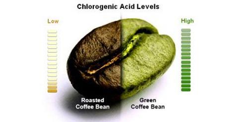 Можно ли похудеть при помощи зеленого кофе?