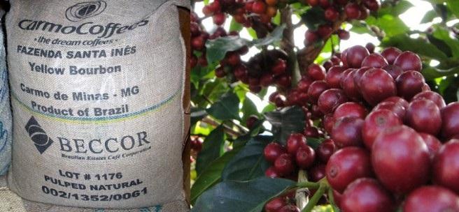 Кофе Fazenda Santa Ines