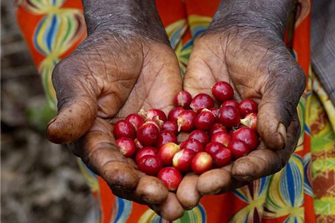 страны экспортеры кофе