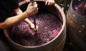 готовим вино